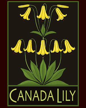 Canada Lily Print